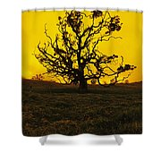 Koa Tree Silhouette Shower Curtain