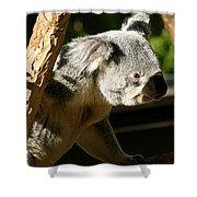 Koala Bear 2 Shower Curtain