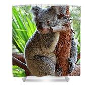 Koala Mama Shower Curtain
