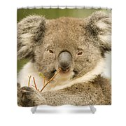 Koala Snack Shower Curtain