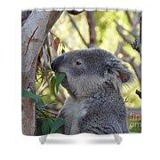 Koala Time Shower Curtain