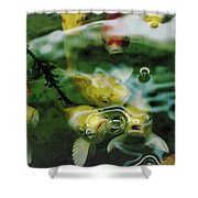 Koi  Shower Curtain by Jeff Swan