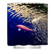 Koi On Blue And Gold Shower Curtain