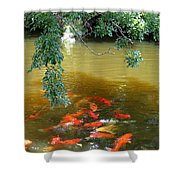 Koi Party Shower Curtain