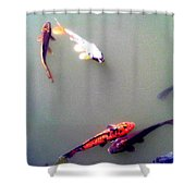 Koi Pond Brooklyn Shower Curtain