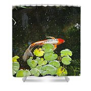 Koi With Lily Pads B Shower Curtain