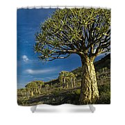 Kokerboom Shower Curtain