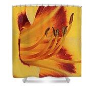 Kokomo Sunset 05 - Daylily Shower Curtain