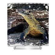 Komodo Dragon Shower Curtain