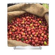 Kona Coffee Bean Harvest Shower Curtain