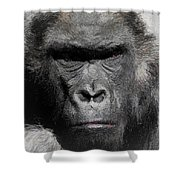 Kong Of The Jungle - Painted Shower Curtain