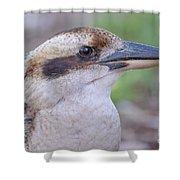 Kookaburra 12 Shower Curtain