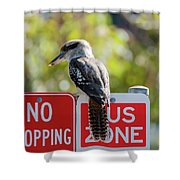 Kookaburra On A Road Sign Shower Curtain