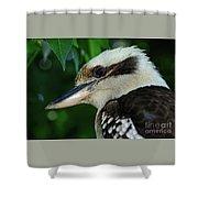 Kookaburra Portrait By Kaye Menner Shower Curtain