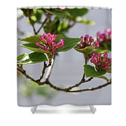 Korean Spice Viburnum Shower Curtain