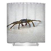 Kua Bay Crab 1 Shower Curtain