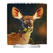 Kudu Portrait Eating Green Leaves Shower Curtain