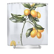 Kumquat Shower Curtain by Margaret Ann Eden