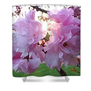 Kwanzan Cherry Blossom Shower Curtain