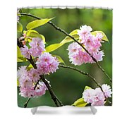 Kwanzan Cherry Bossom Flowers Shower Curtain