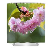 Kwanzan Cherry Bossom Flowers Macro Shower Curtain