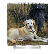Lab And Fire Hydrant Shower Curtain