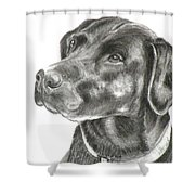 Lab Charcoal Drawing Shower Curtain