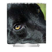 Lab Mix Shower Curtain