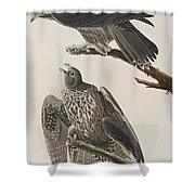 Labrador Falcon Shower Curtain