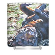 Labrador Retriever Chocolate Fun Shower Curtain