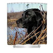 Labrador Retriever Waiting In Blind Shower Curtain