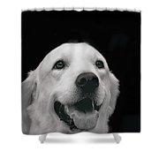 Labrador Smiling B W Shower Curtain