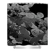 Lace Cap Hydrangea In Black And White Shower Curtain