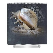 Lace Murex Sea Shell In Blue 2 Shower Curtain