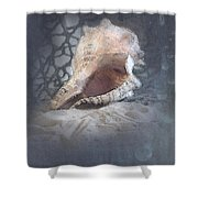 Lace Murex Sea Shell In Blue Shower Curtain