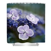 Lacecap Hydrangea Macrophylla Serrata Shower Curtain