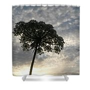 Laced With Beauty Shower Curtain