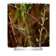 Lacewing Shower Curtain