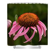 Lacewing On Echinacea Blossom Shower Curtain