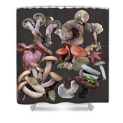Lactarius 1 Shower Curtain