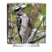 Hairy Woodpecker Shower Curtain