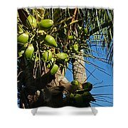 Laden Palm Tree Shower Curtain