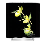 Ladies Trio Shower Curtain