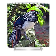 Lady Amherst's Pheasant Shower Curtain