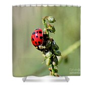 Lady Beetle Shower Curtain