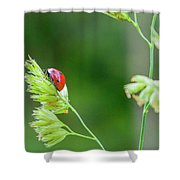 Lady Bird On A Herb Straw Close Up Shower Curtain