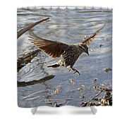 Lady Blackbird Shower Curtain