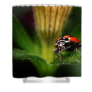 Lady Bug 1 Shower Curtain