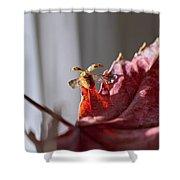 Lady Bug Flight Shower Curtain