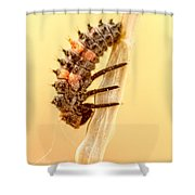 Lady Bug Larva Shower Curtain